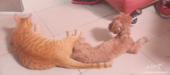 cat5-1