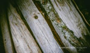 naturalspoon_wood_driftwood